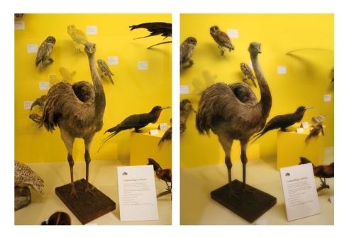 double ostrich web